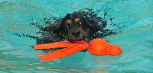 Zondag 10 september Baas- en hondzwemmen